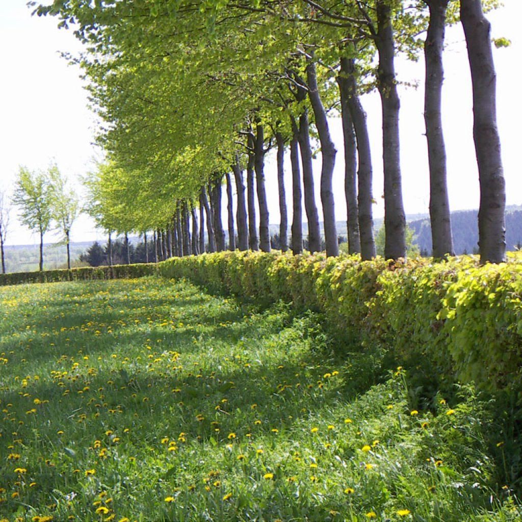 Heckenpflanzen – Gartenprofi Rücklinger